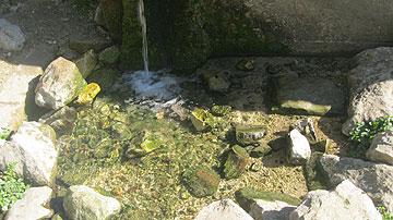 מים צלולים ישר מהאדמה (צילום: דרור זבדי)
