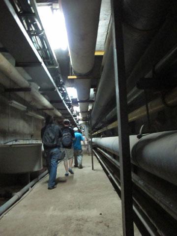 בשקט בשקט. צועדים במנהרה (צילום: מיכאל יעקובסון)
