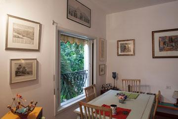 דקל בחלון (צילום: אביעד בר נס)
