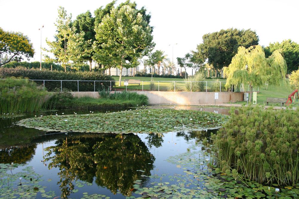 פארק כפר סבא (פרויקט חדש יחסית של צור וליאור וולף). המשרד נקרא לתכנן את הריאה הירוקה של העיר - וזהו רק חלק מהתוצאה (צילום: דן צור וליאור וולף אדריכלי נוף)