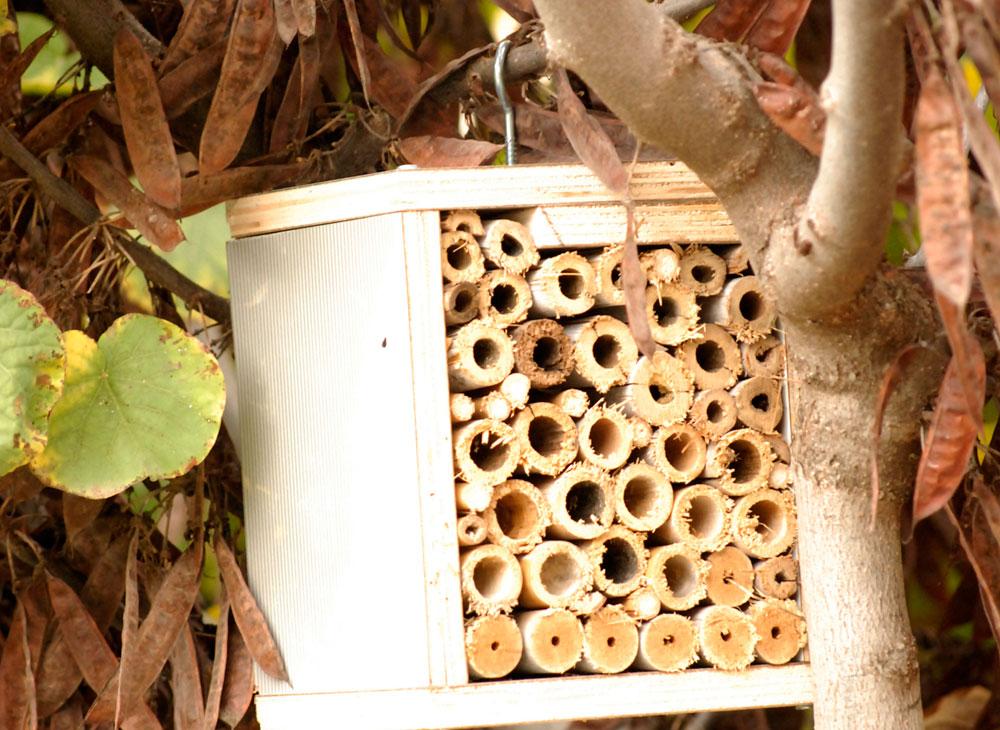 לא תוכלו להבטיח שרק חרקים מועילים יגורו בבית המלון, אבל תהיו בטוחים שהגדלתם את הסיכוי להימצאותם של חרקים טובים (צילום: שושן דגן)
