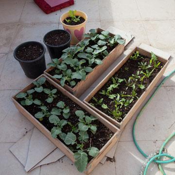 גינת ירק קטנה שמטפחת על הגג דניאל, שותפה וחברה מימי הקומונה בשנת השירות (צילום: טל ניסים)