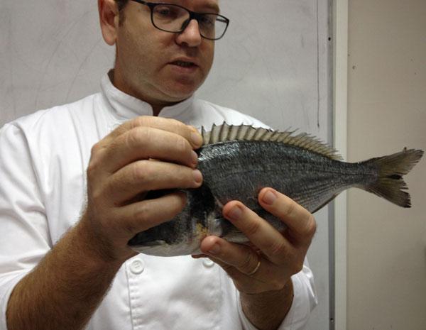 מלאי הדגים בים מתדלדל והולך. חגי עם חיה בסכנת הכחדה (צילום: מרב סריג )