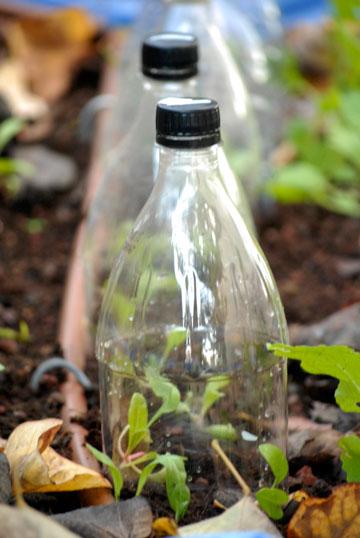 מיני חממות מבקבוקי פלסטיק (צילום: שושן דגן )