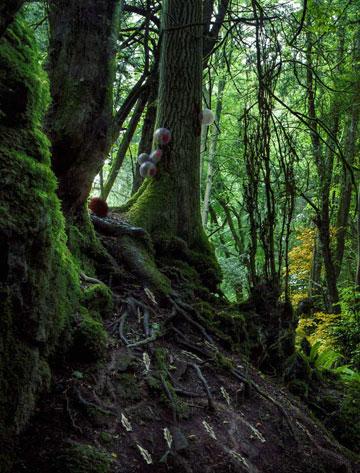 ביולוגיה סינתטית. הבחירה של טננבאום וחזן (צילום והדמיה: Alexandra Daisy Ginsberg, Tommaso Lanza and Tom Mawby)