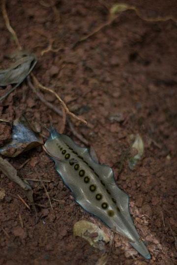 שבלול שסורק את רמת החומציות בקרקע מזוהמת ומצמצם אותה (צילום והדמיה: Alexandra Daisy Ginsberg, Tommaso Lanza and Tom Mawby)