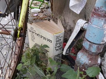 רחוב הקישון, תל אביב, 27 באוגוסט 2013 (צילום: ציפה קמפינסקי)