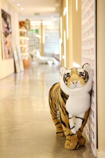 יש נמרים גם במסדרון של קומת המשרדים (צילום: אורית פניני)