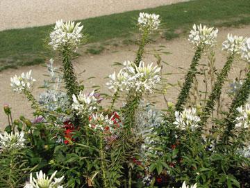 לא סתם אוסף של צמחים יפים. יש תכנון מאחוריהם (צילום: גלית וינקלר)