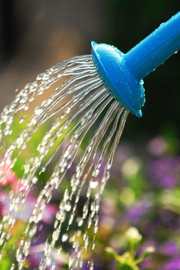משפך. אלמנט דקורטיבי, חסכוני במים (צילום: שאטרסטוק)