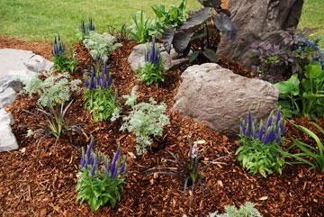 חיפוי ברסק עץ. גם יפה וגם שומר על הגינה (צילום: שאטרסטוק)