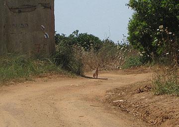 צילום: דרור זבדי