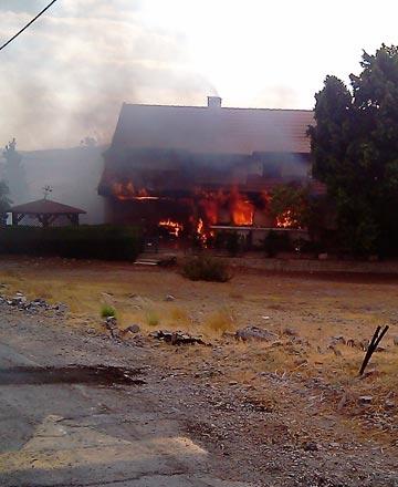 שני גורים כמעט נותרו מאחור. הבית עולה באש (צילום: אסנת לסטר)