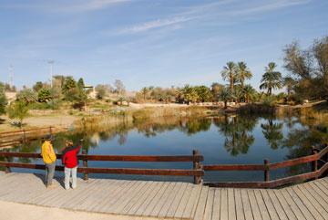 נווה מדבר. פארק ספיר (צילום: ארכיון הצילומים קקל, רונן וטורי)