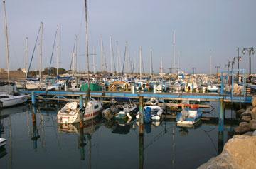 נמל עכו. הדגים מגיעים ישר לשוק (צילום: thinkstock)