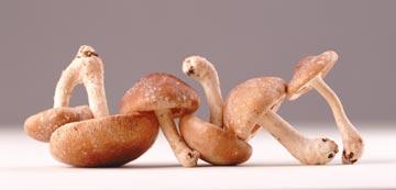 להשתמש במגוון רחב של פטריות טריות (צילום: thinkstock)