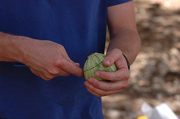 הפכו את הבישול לפס ייצור חברתי: אחד מגלען, שני חותך, שלישי ממלא, רביעי אורז - והחמישי דוחף למדורה (צילום: ליאור צאליק)