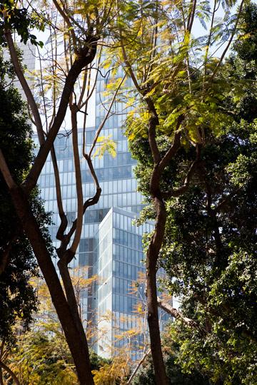מבעד לעצים. המגדל והשדרה (צילום: עמית גרון)