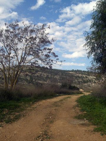 הולכים בעקבות דינו. עמק הארזים (צילום: אריאלה אפללו)