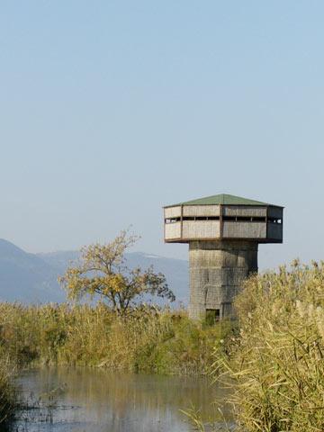 מבט על הציפורים והעמק. מגדל התצפית בהחולה (צילום: אריאלה אפללו)