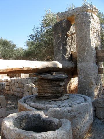 בעקבות תעשיית השמן בימי קדם. הגן הארכילוגי בכברי (צילום: אריאלה אפללו)