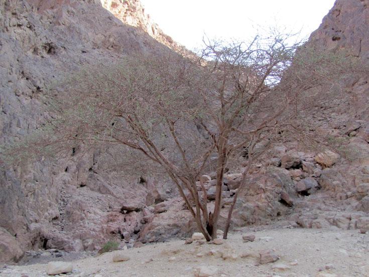 צמחייה מקומית (צילום: דרור זבדי)