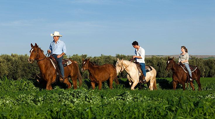 טיול סוסים רומנטי בחוות מוסקט (צילום: אורי אקרמן וגידי בועז)