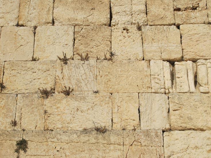הכותל המערבי. שריד מחומת הר הבית, המתוארך לתקופת בית שני, מקום תפילה לעולי רגל מאז המאה ה-4 לספירה (צילום: מיכאל יעקובסון )