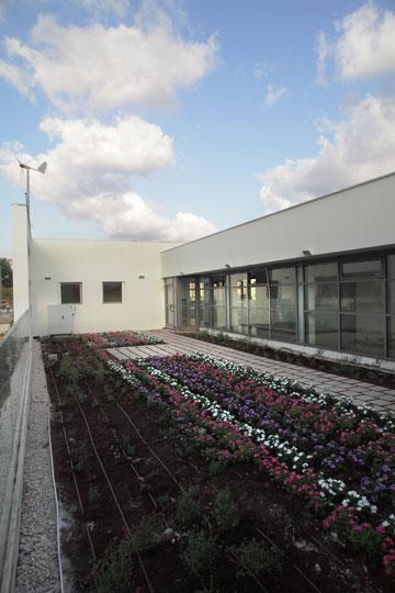 הגג הירוק בבית הספר בהוד השרון. שטח לגידול מזון  (צילום: אמית הרמן)