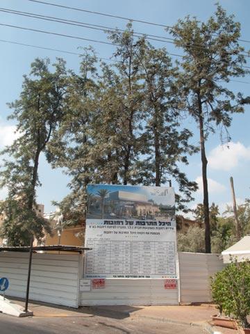 עשרות עצים ותיקים שילמו בחייהם. העבודות (צילום: טל נסים)