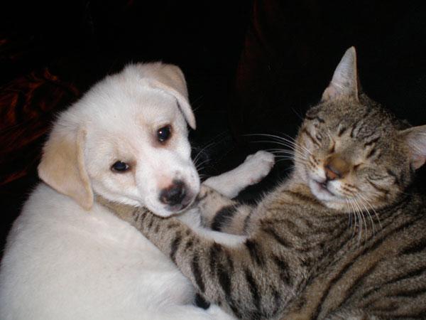 חיים בשלום. נזק החתול המאומץ וג'סטה הכלבה (צילום: ברוריה טל)